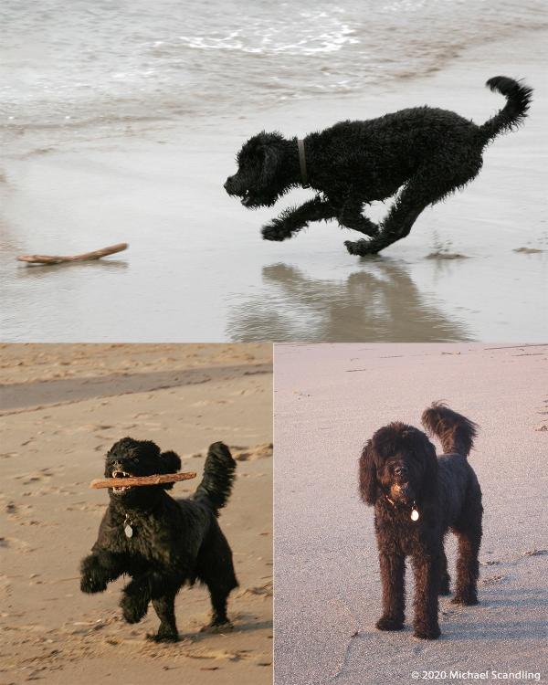 Beach MontageBlog